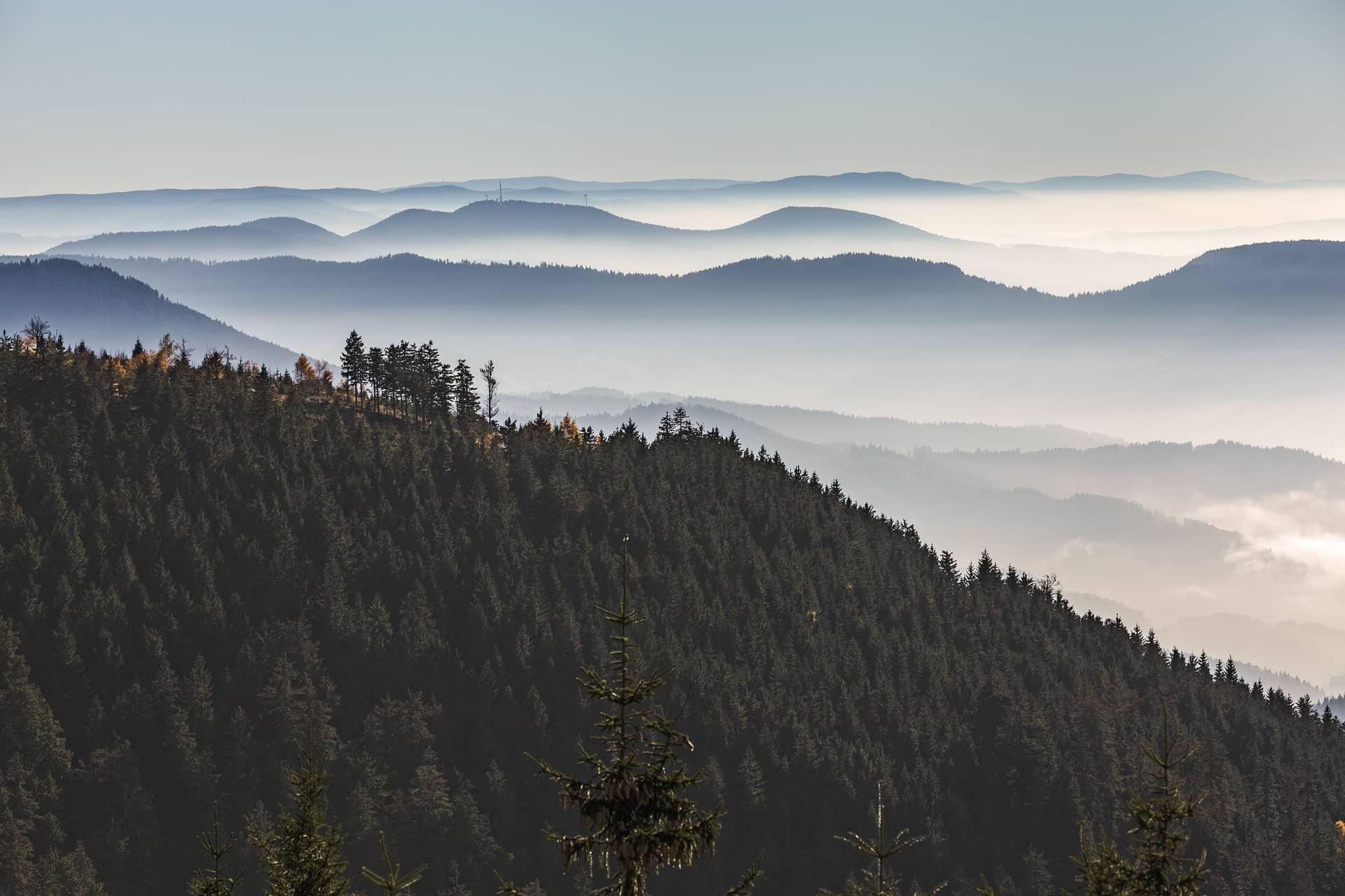 Schwarzwald im Dunst des anbrechenden Tages